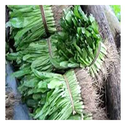 Coriander leaves-ধনে পাতা