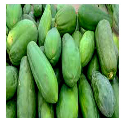 Green-Papaya-সবুজ-পেঁপে