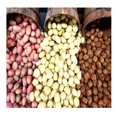 Local Potato-দেশী আলু