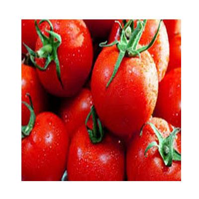 Tomato- টমেটো