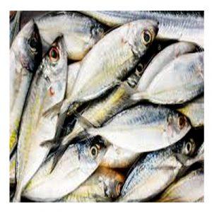 Bora fish-বরা মাছ