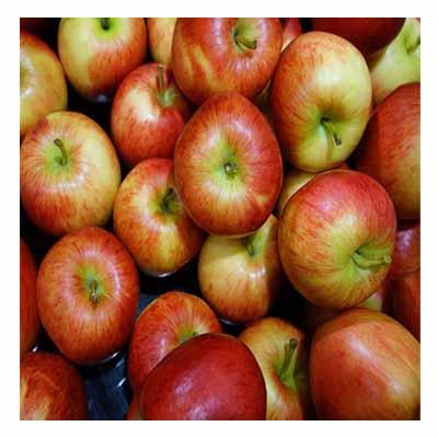 Cortland-Apple