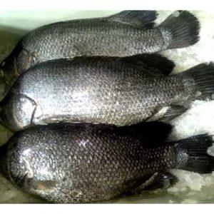 Koy-Coral-Fish